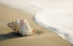 sea-shell-on-shore
