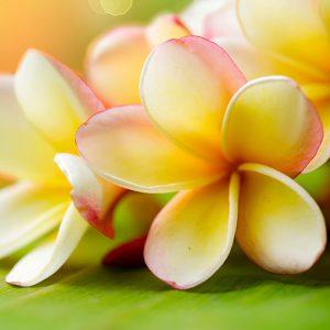 hawaiian-orchids
