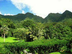 Hawaii-landscape