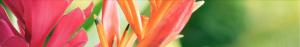 hawaiian-flower