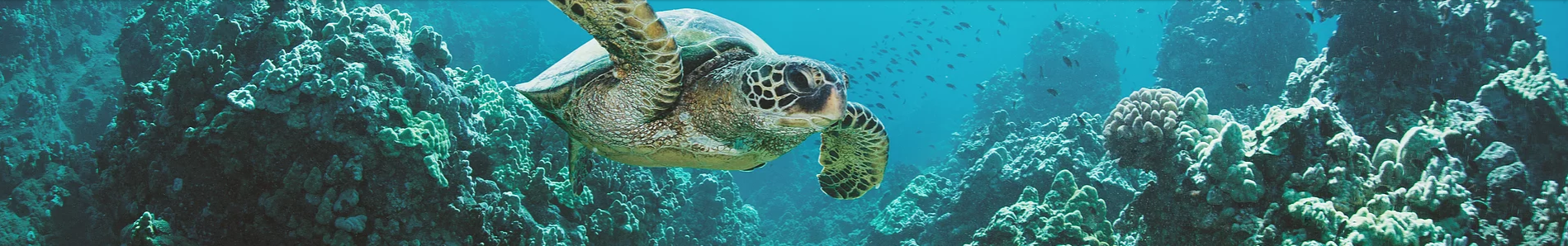 turtle_in_the_sea
